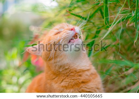 Cute Ginger cat relaxing in the home garden - stock photo