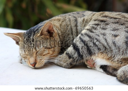 Cute ginger cat sleeping on a table. - stock photo