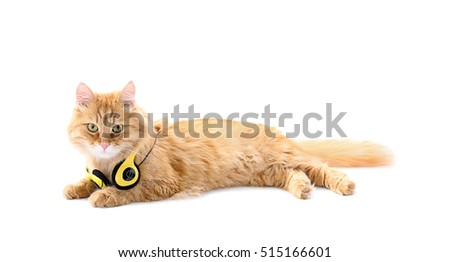 Cute ginger cat with headphones, isolated on white