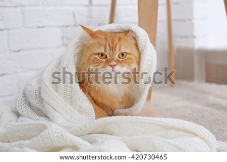 Cute ginger cat wrapped in plaid - stock photo