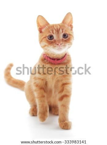 Cute ginger kitten isolated on white background - stock photo