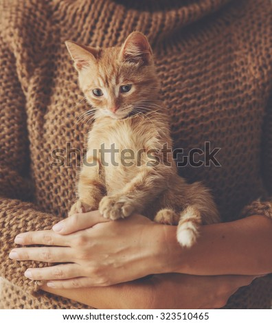 Cute ginger kitten sitting on his owner's hands in warm sweater - stock photo
