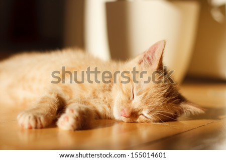 Cute ginger kitten sleeping on the floor - stock photo