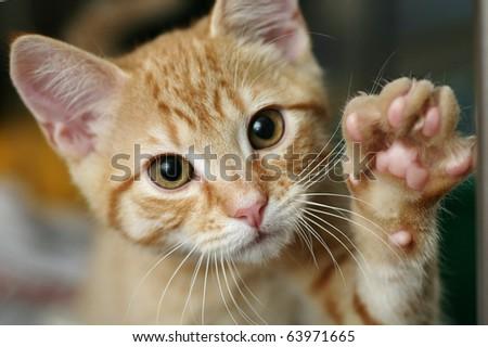 Cute ginger kitten waving - stock photo