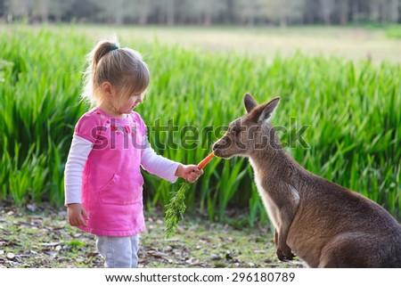 cute girl feeding kangaroo at zoo - stock photo