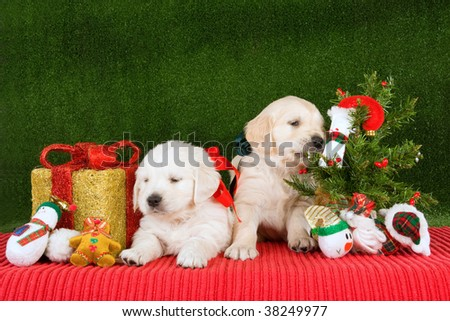 Cute Golden Retriever puppies with Christmas tree, gift and toys - stock photo