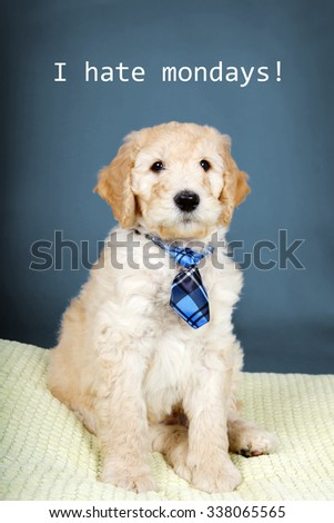 Cute goldendoodle puppy with plaid tie and I hate mondays text