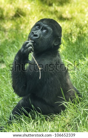 cute gorilla baby with a small wooden branch - stock photo