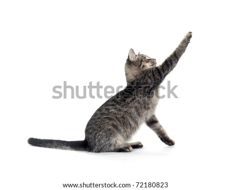 Cute gray cat on white background - stock photo