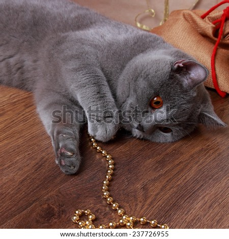Cute gray fluffy one year kitten investigating the decorations on a Christmas tree on Holiday theme/Lovely domestic animal on holiday theme