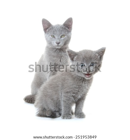 Cute gray kitten and adult cat on white background - stock photo