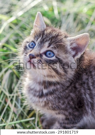 Cute gray kitten in the green grass - stock photo