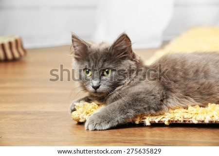 Cute gray kitten on carpet at home  - stock photo