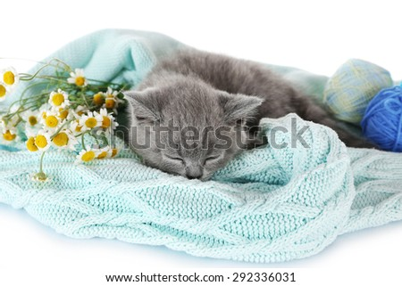 Cute gray kitten on plaid  with chamomiles, closeup - stock photo