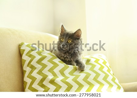 Cute gray kitten on sofa at home  - stock photo