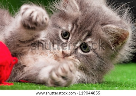 Cute gray kitten playing red clew of thread on artificial green grass - stock photo