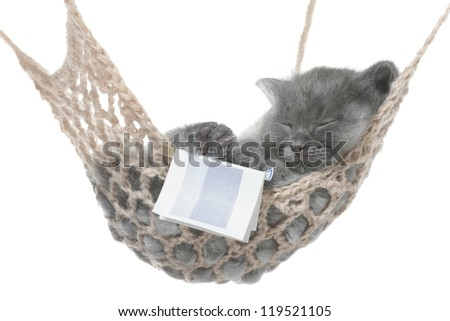 Cute gray kitten sleep in hammock with open book on a white background. - stock photo