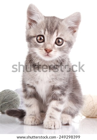 cute gray kitten with a balls on a white background