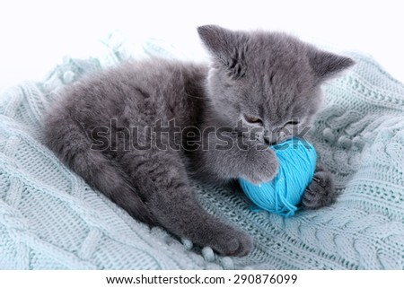 Cute gray kitten with skein of thread on warm plaid, closeup - stock photo