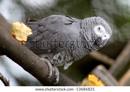 Cute gray parrot sitting on a tree - stock photo