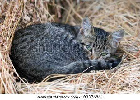 cute grey cat in the straw - stock photo
