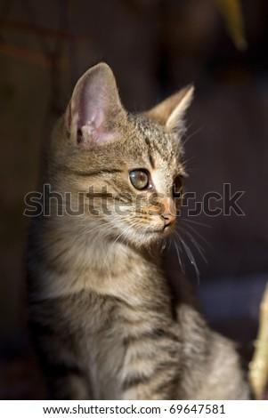 cute grey kitten - stock photo
