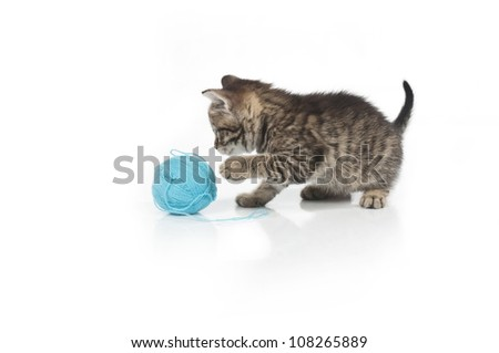 Cute grey kitten and ball of thread isolated on white background - stock photo