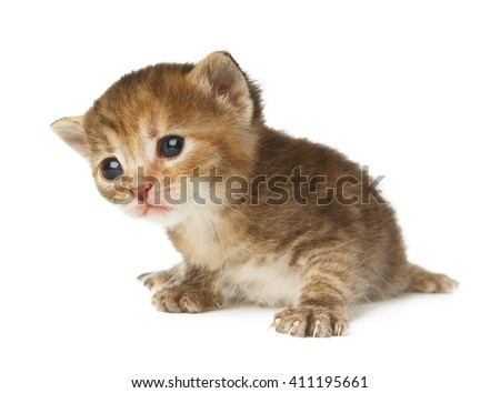 Cute grey striped kitten. Cute sad kitten 2 weeks old, creeping isolated at white background. Adorable pet. Small heartwarming kitten. Little cat. Closeup isolated. High key - stock photo
