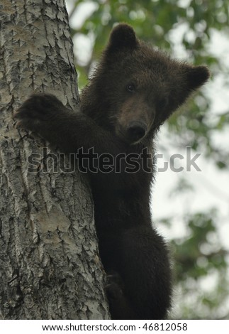 cute grizzly cub - stock photo