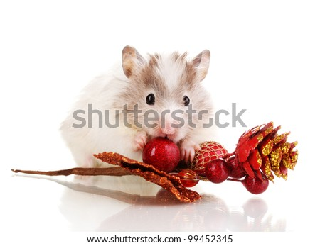 Cute hamster and autumn twig isolated white - stock photo