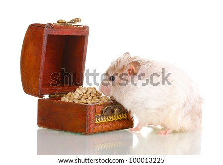 Cute hamster and chest with seeds isolated white - stock photo