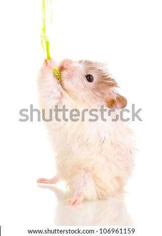 Cute hamster and rope isolated white - stock photo