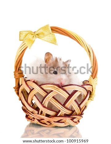 Cute hamster in basket isolated white - stock photo