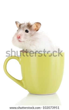 Cute hamster in cup isolated white - stock photo