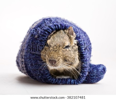 Knitting Pattern For Baby Oleg : Oleg Kozlovs Portfolio on Shutterstock