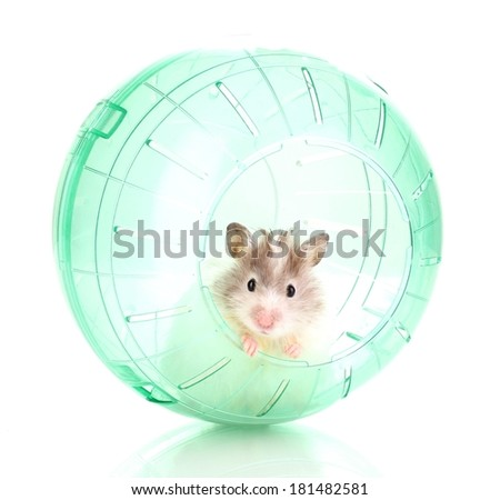 Cute hamster popping out of green ball isolated white  - stock photo