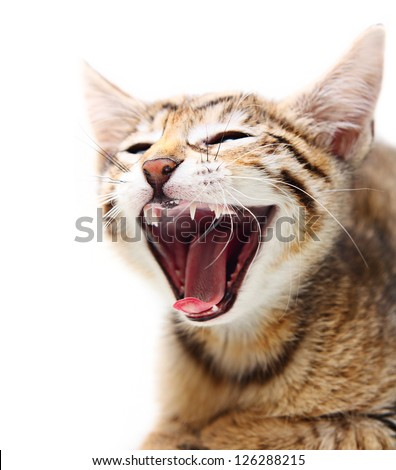 Cute happy cat. - stock photo