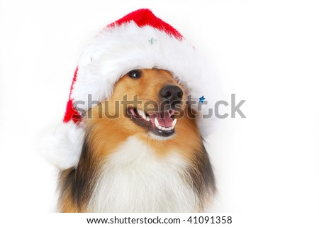 cute happy dog with christmas bonnet