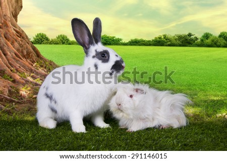 cute hare and a guinea pig eating grass under a tree on a summer day