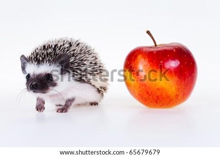Cute hedgehog - stock photo