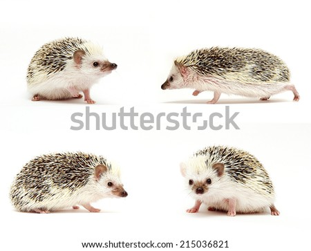 cute hedgehog baby - stock photo