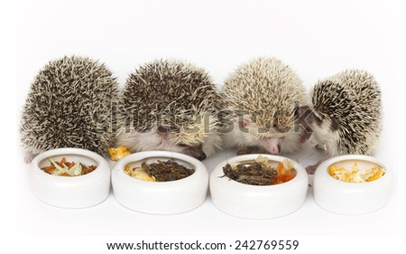cute hedgehog her eating worms food - stock photo