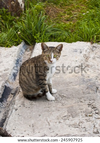 Cute homeless cat looking at camera - stock photo