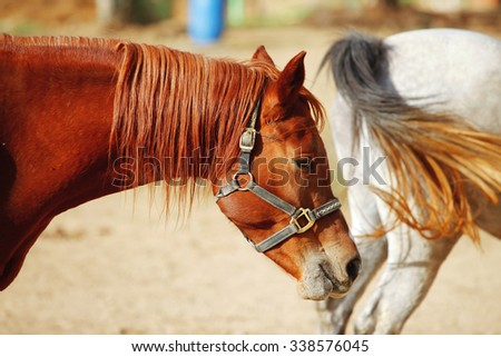 cute horse walks on the ranch