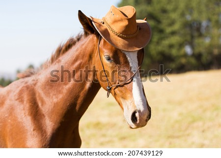 cute horse wearing a cowboy hat - stock photo