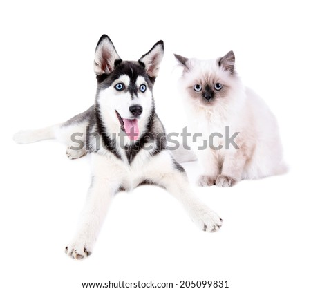 Cute husky puppy and cat, isolated on white - stock photo