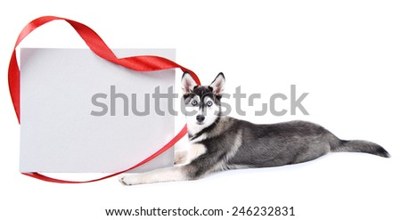 Cute husky puppy with empty greeting card, isolated on white - stock photo