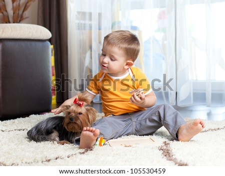 cute kid feeding pet dog yorkshire terrier