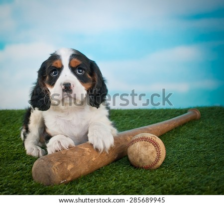 Cute King Cavalier Puppy laying in the grass with a baseball bat and ball, with copy space.
