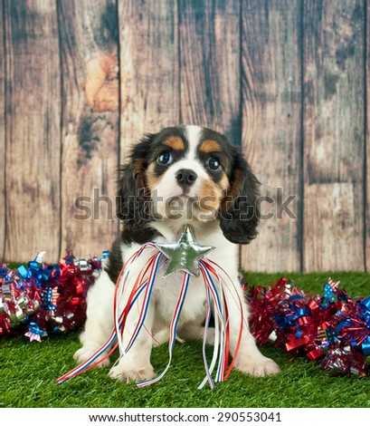 Cute King Cavalier puppy sitting in the grass outdoors with red, white and blue garland behind him wearing a Patriotic star. - stock photo